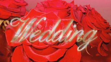 proDAD Adorage Wedding